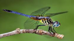 Insects - Photo #04