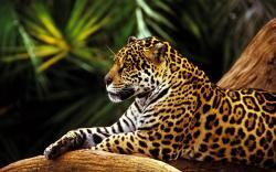 Jaguar Animal Hd Wallpaper Pc Iwalldesk