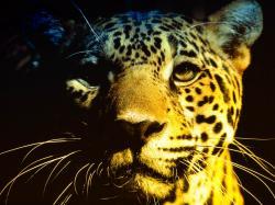 Jaguar background wallpaper