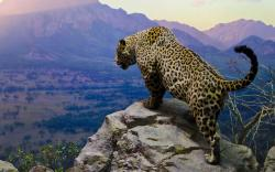 Jaguar mountain