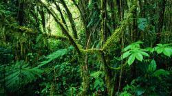 ... Jungle Wallpaper ...
