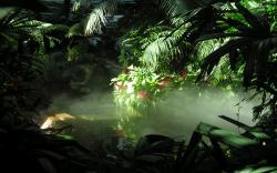 HD Wallpaper | Background ID:356901. 2560x1600 Earth Jungle