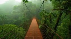 ... Jungle Wallpaper Jungle Wallpaper