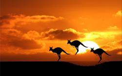 Kangaroo Wallpaper; Kangaroo Wallpaper ...