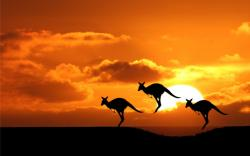 This is a chance to show your likeness. So get your Kangaroo in Sunset HD Wallpapers and display it. We have collection of 1920×1080 and different sizes.