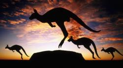 Awesome Kangaroo Wallpaper