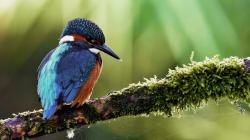 kingfisher bird hd new wallpaper
