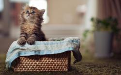 Cute Little Kitten Basket Blur Photo HD Wallpaper