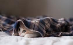 Cute Bed Kitten Wallpaper 43751