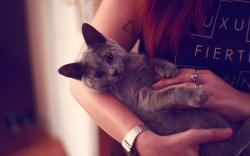 Kitten Girl Mood HD Wallpaper