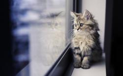 Kitten Look Window