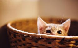 Kitten Muzzle Basket