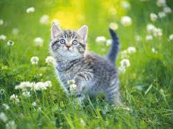 Kitten Enjoying The Nature HD wallpapers