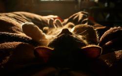 Kitten sleep on blanket