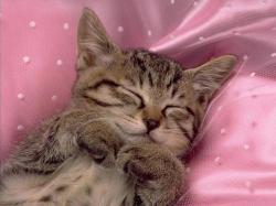 Baby kitten sleeping wallpaper. Baby kitten sle.