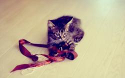 Kitten Tape Game HD Wallpaper