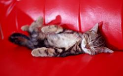 Kitty sleeping Couch