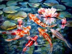 Koi Fish HD Wallpaper