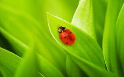 Nature Grass Ladybug