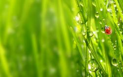 Ladybug lush grass