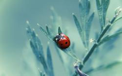 ... Ladybug Wallpaper ...