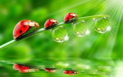 Ladybugs wallpapers and images - download wallpapers, pictures, photos | Smiles | Pinterest