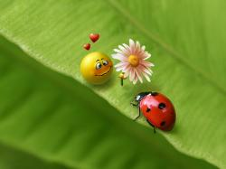 To download Ladybugs in different sizes, click the wallpaper resolution you want.