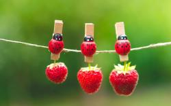 Strawberries Berries Red Clothespins Ladybugs