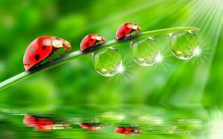 Ladybugs Leaves Drops