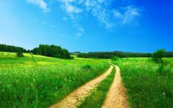 Landscape Field Path (click to view)