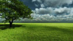 Green Landscape Wallpapers
