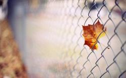 Leaf Fence Autumn Macro
