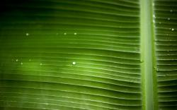 Leaf Macro Wallpaper