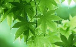Leaf Wallpaper · Leaf Wallpaper ...