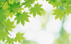 Green Leafs Wallpapers Free