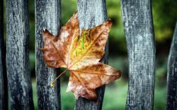 Leaf Fence Autumn