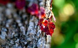 Leaves Nature Macro Focus