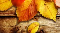 original wallpaper download: The autumn leaves on the wood - 1920x1080