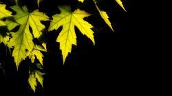 ... Leaves Wallpaper ...