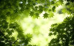 Leaves Wallpaper · Leaves Wallpaper ...