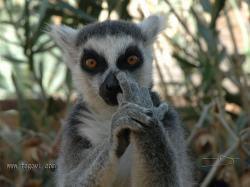 Web Www Fegovi Com Lemur Pictures Las Noticias Son Lo Único Veloz En