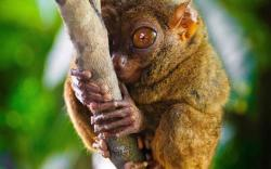 DOWNLOAD: lemur free picture 2560 x 1600