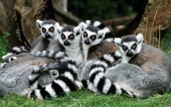 HD Wallpaper | Background ID:368562. 1920x1200 Animal Lemur