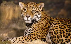 Leopard 05
