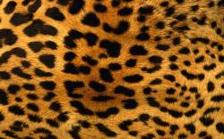 Leopard Background 18395 1920x1080 px