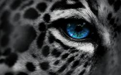 Free Leopard Backgrounds 18414 1920x1200 px. Category: Animals Resolution: 1920x1200px. Filesize: 1.23 MB. Deer Wallpaper 12905