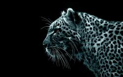 Leopard Wallpaper 11