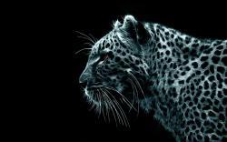 Leopard Wallpaper 11
