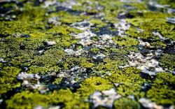 ... Lichen wallpaper 1680x1050 ...