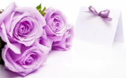 Lilac Roses Wallpaper in 1920x1200 Widescreen